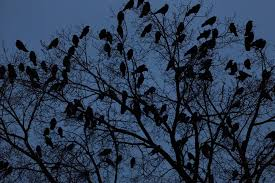 crows 5